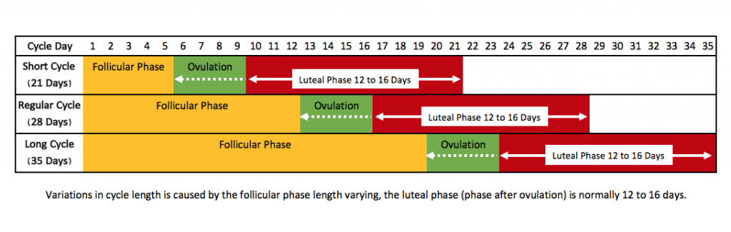 1menstrual-cycle-lengths